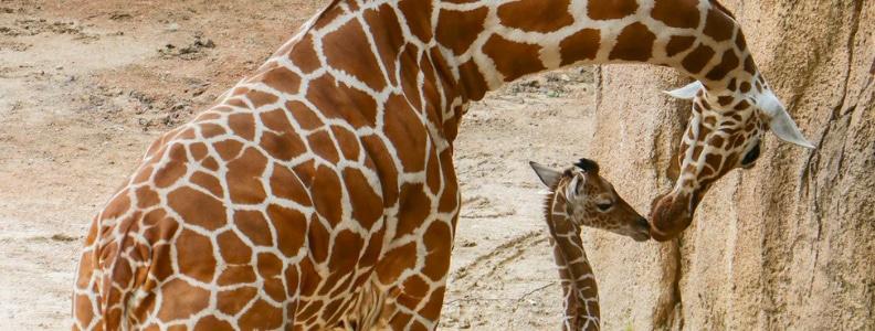 Summer Activities in Dallas during Coronavirus | Visit the Zoo